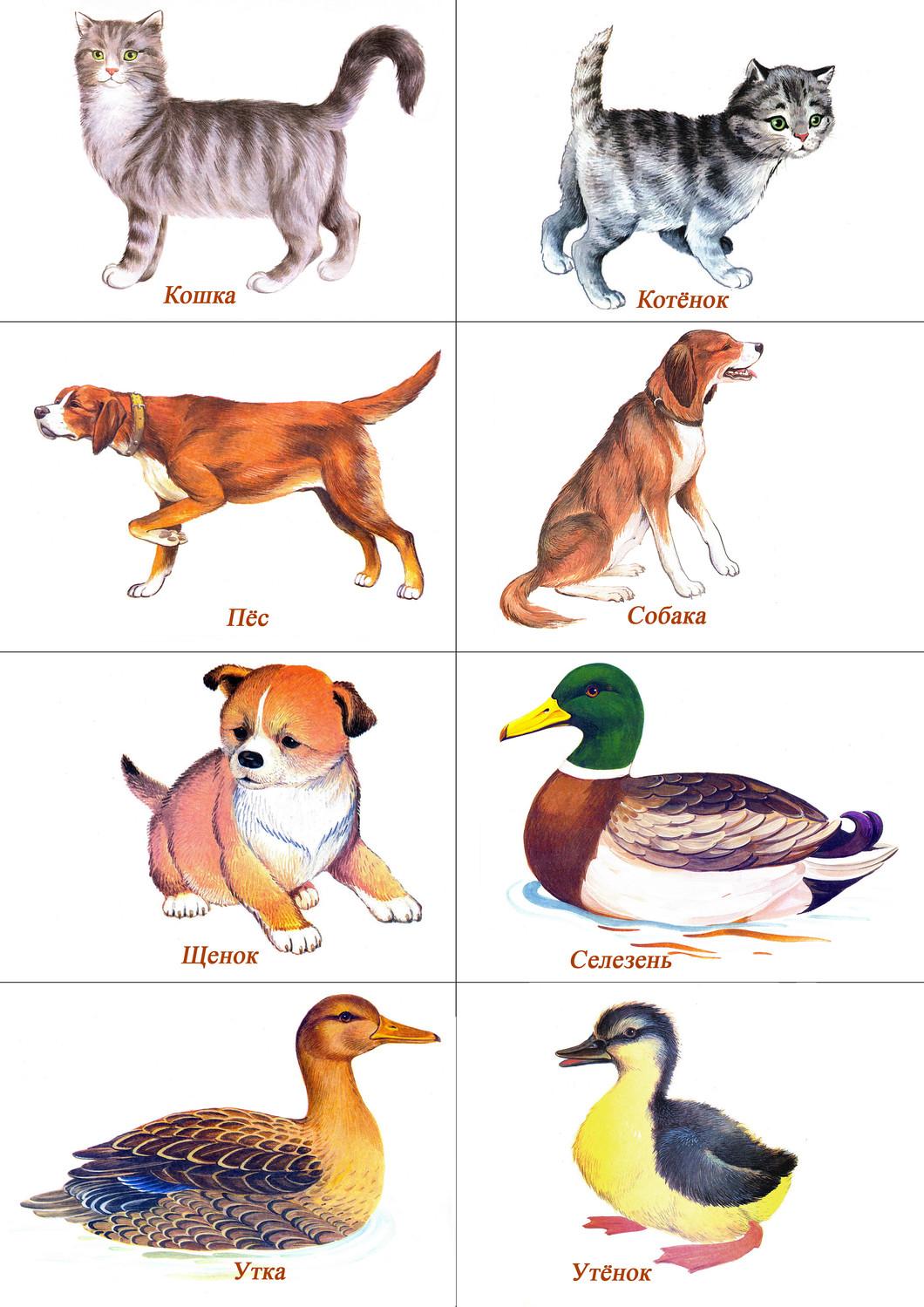 Фото для детей животные и их детёныши картинки
