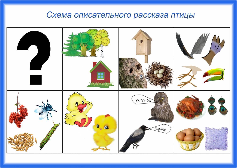 Схемы для составления описательных рассказов о птицах